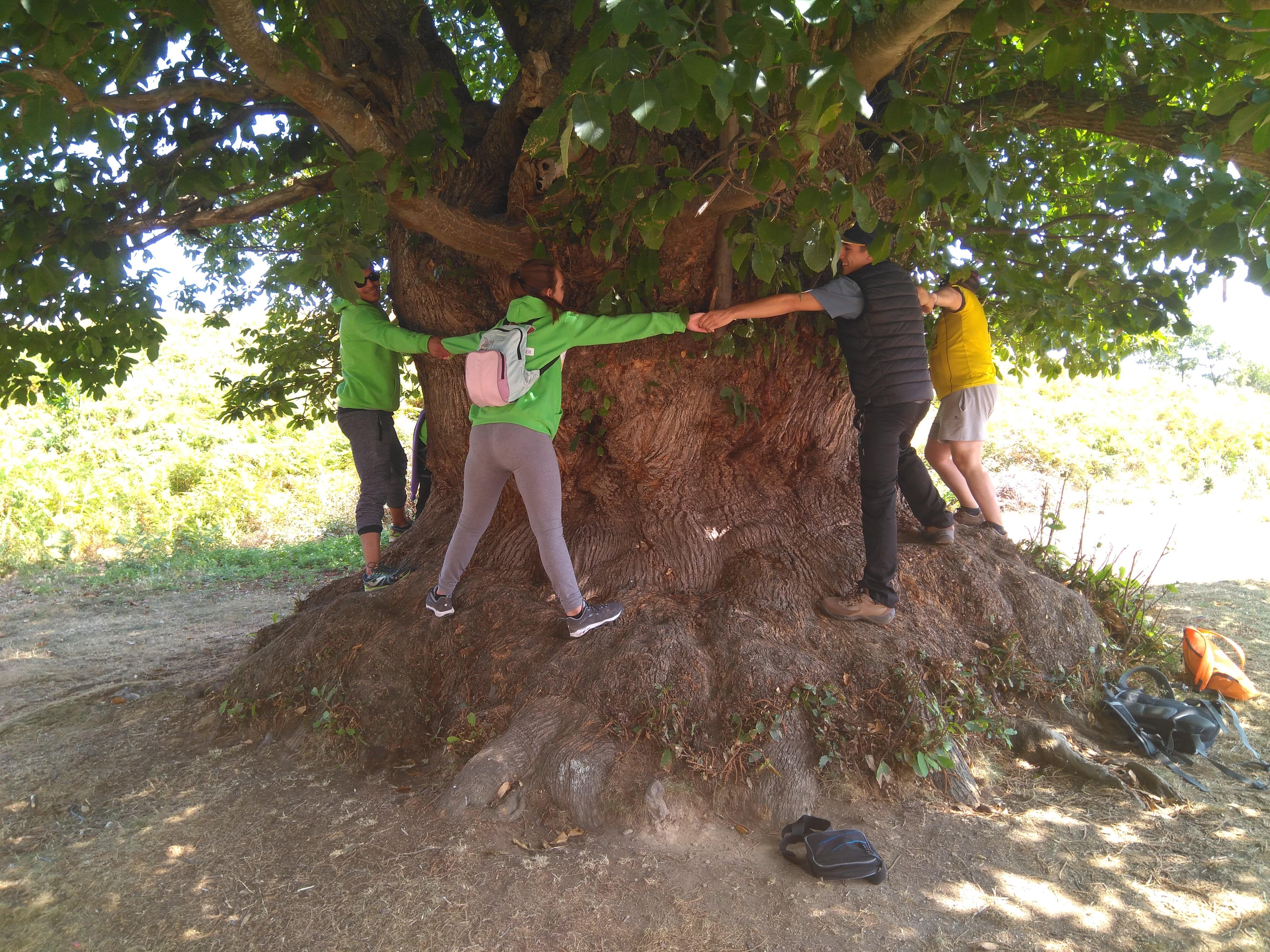 Proyectos escuela taller de Cillorigo de Liébana II